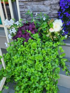 Grown To Order Planters 12