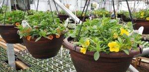 Grown To Order Planters 3