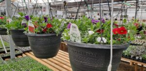 Grown To Order Planters 5