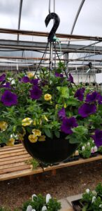 Grown To Order Planters 8