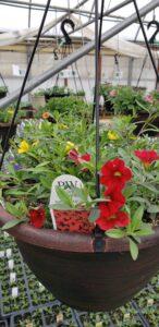 Sunnyside Plants 12