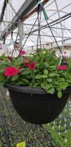 Sunnyside Plants 13