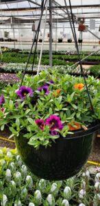 Sunnyside Plants 14