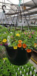 Sunnyside Plants 15