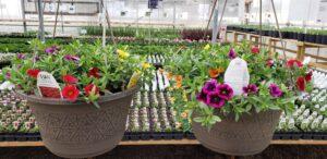 Sunnyside Plants 16