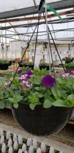 Sunnyside Plants 17
