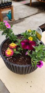 Sunnyside Plants 2