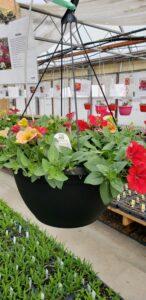 Sunnyside Plants 20