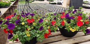 Sunnyside Plants 25