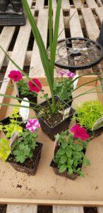 Sunnyside Plants 26