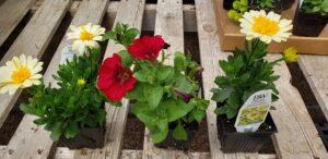 Sunnyside Plants 27