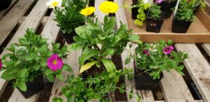 Sunnyside Plants 28