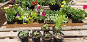 Sunnyside Plants 29