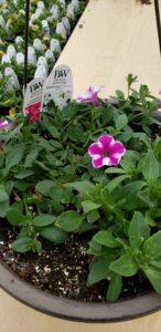 Sunnyside Plants 3