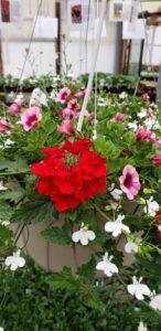 Sunnyside Plants 33
