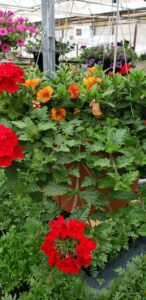 Sunnyside Plants 34
