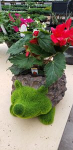 Sunnyside Plants 35
