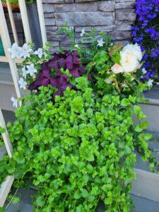 Sunnyside Plants 36