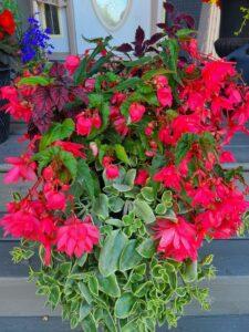 Sunnyside Plants 37