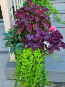 Sunnyside Plants 38