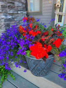 Sunnyside Plants 39