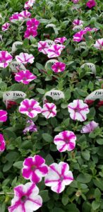 Sunnyside Plants 4