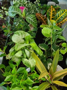Sunnyside Plants 41