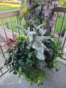 Sunnyside Plants 43