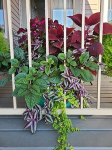Sunnyside Plants 44