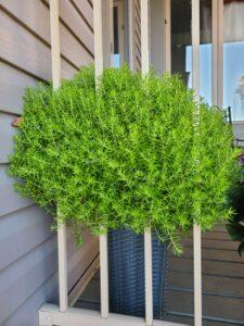 Sunnyside Plants 45