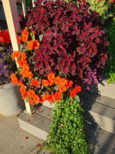 Sunnyside Plants 46