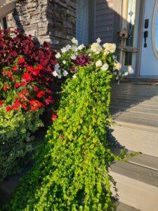 Sunnyside Plants 48