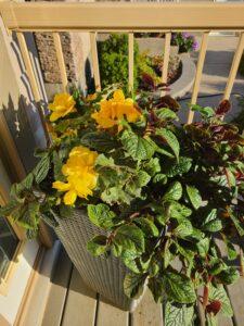 Sunnyside Plants 49