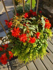 Sunnyside Plants 50