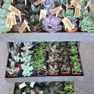 Sunnyside Plants 51