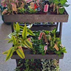 Sunnyside Plants 52
