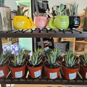 Sunnyside Plants 53