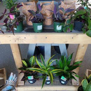 Sunnyside Plants 54