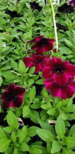Sunnyside Plants 7